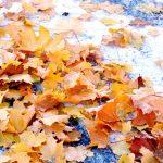 По Кыргызстану ожидается снегопад — прогноз погоды на 2 ноября