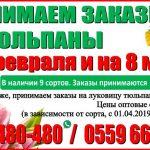 Принимаем заказы на тюльпаны к 14 февраля и 8 марта 2019