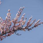До 21 градуса тепла — прогноз погоды по Кыргызстану на 16 марта