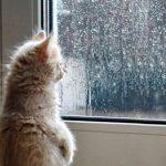 Дождь и снег — прогноз погоды по Кыргызстану на 6 марта