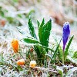 Штормовое предупреждение: 31 марта возможны заморозки