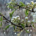 Дожди, снег, местами туман — прогноз погоды по Кыргызстану на 15 апреля